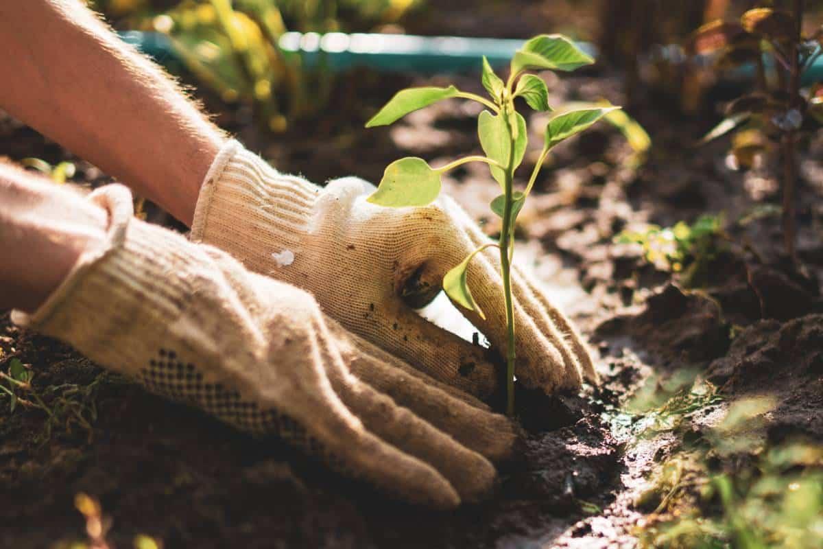 corriger l'acidité de votre sol