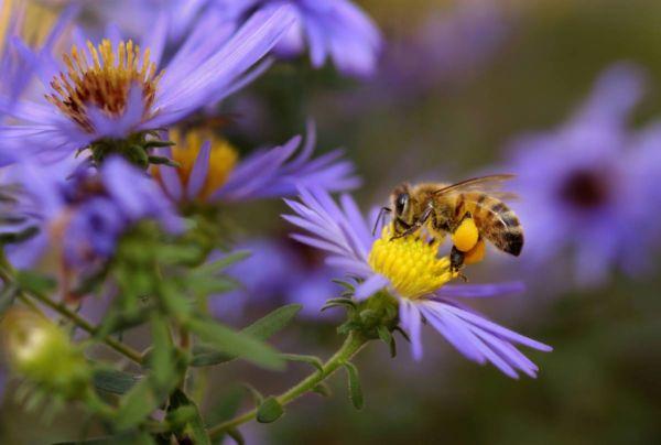 Quand l'industrie essaie de protéger les abeilles