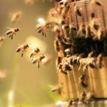 Quand l'industrie protège l'écosystème et les abeilles